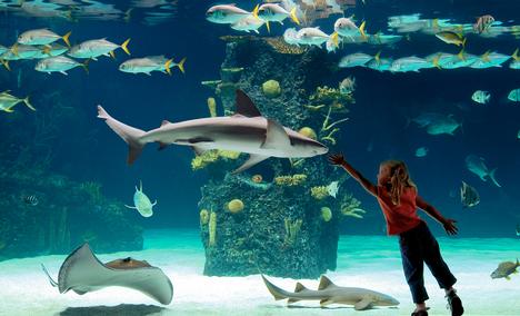 Newport Aquarium Newport Ky